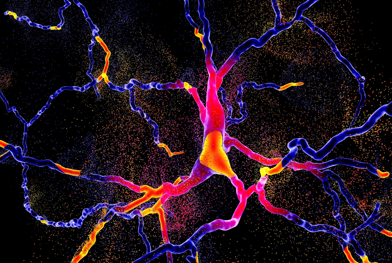 Illustration of brain neurons